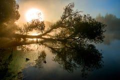 Fantastischer nebeliger Fluss mit netter Reflexion im Sonnenlicht stockfotografie