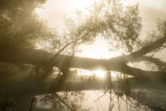 Fantastischer nebeliger Fluss mit netter Reflexion im Sonnenlicht lizenzfreie stockfotos