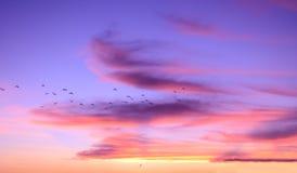 Fantastischer schöner Himmel bei Sonnenuntergang, Federwolkewolken der lila Farbe stockfotos
