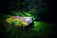Fantastischer Stumpf im verzauberten Wald Stockbild