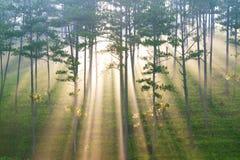 Fantastischer Wald im Sonnenlicht und Strahl Lizenzfreies Stockbild