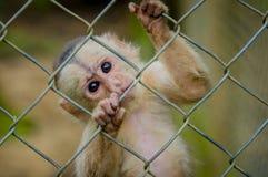Fantastisches Nahaufnahmefoto des spielerischen netten kleinen Affen von Amazonas-Dschungel Ecuador Lizenzfreies Stockbild