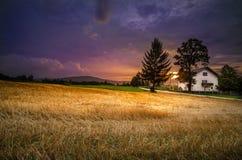 Fantastisches Weizenfeld bei dem Sonnenuntergang Lizenzfreie Stockfotos