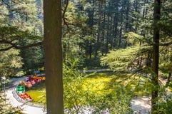 Fantastisk bästa sikt på simbassäng av en lyxig semesterort i ett skogområde royaltyfri bild