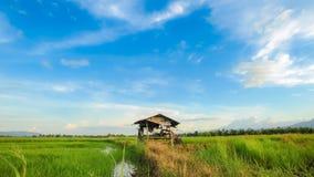 Fantastisk blå himmel med den lilla kojan på risfältfält. Royaltyfri Fotografi