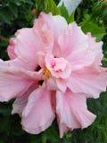 Fantastisk blomma royaltyfri foto