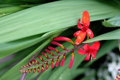 fantastisk blommared Royaltyfria Foton