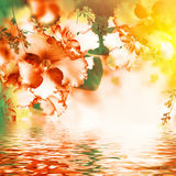Fantastisk bukett Royaltyfria Bilder