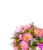 Fantastisk bukett av rosa pions på vit Arkivbilder