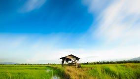 Fantastisk bulehimmel med den lilla kojan på risfältfält Royaltyfria Foton
