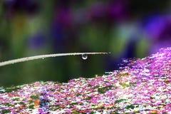 Fantastisk dagg Fotografering för Bildbyråer