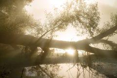 Fantastisk dimmig flod med trevlig reflexion i solljuset Royaltyfria Foton