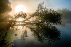 Fantastisk dimmig flod med trevlig reflexion och strålar av ljus i solljuset Royaltyfri Bild