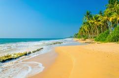Fantastisk exotisk sandig strand med höga palmträd Arkivbilder