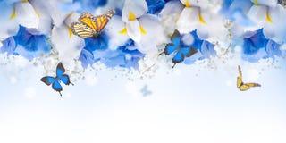 Fantastisk fjärilsfe av blommor arkivbilder