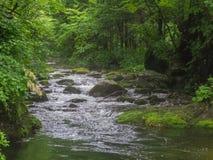 Fantastisk flod i djupt skoglandskap Royaltyfri Bild