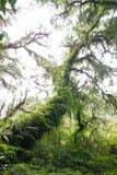 Fantastisk forntida treeräkning med moss och fernen Arkivfoto