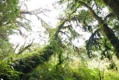 Fantastisk forntida treeräkning med moss och fernen Arkivbild
