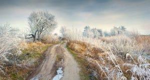 Fantastisk frostig lanscape i skog Arkivfoton