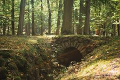Fantastisk härlig skogplats En gammal bro över floden bland många träd i en solig varm dag arkivbilder