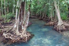 Fantastisk kristallklar smaragdkanal med mangroveskogen Thapom Royaltyfri Foto