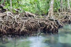 Fantastisk kristallklar smaragdkanal med mangroveskogen Thapom Arkivbilder