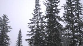 fantastisk liggandevinter Snöfall i Forestet Park Tungt härligt snöfall stock video