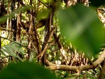 Fantastisk närbild av en skog med bladet i förgrund royaltyfri fotografi