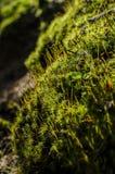 fantastisk natur Royaltyfria Foton