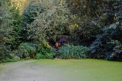 Fantastisk naturtapet - liten vik Fotografering för Bildbyråer