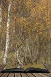 Fantastisk sikt av silverbjörkskogen med guld- sidor i Autumn Fall landskapplats av den övrePadley klyftan i maximalt område in fotografering för bildbyråer