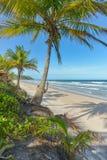 Fantastisk sikt av stränderna nära Itacare Royaltyfria Bilder
