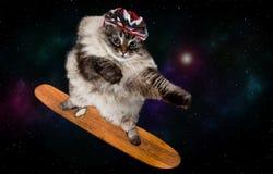 Fantastisk skateboarding katt i utrymme arkivbild