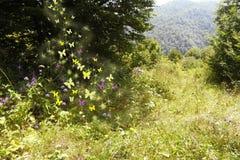 fantastisk skog Royaltyfri Bild