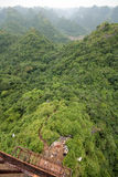 fantastisk skogsikt Arkivbild