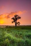 fantastisk solnedgång på risfältfältet Arkivbild
