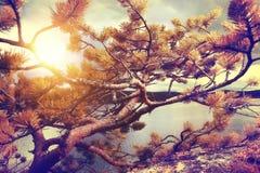 Fantastisk sommarsolnedgång Arkivfoton