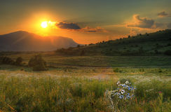 Fantastisk sommarsolnedgång med tusenskönor Arkivfoto