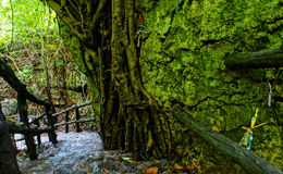 Fantastisk stentrappuppgång, staket, träd Royaltyfri Bild