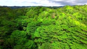 Fantastisk tät grön djungelskog i bergen på en solig dag från antennen 4k lager videofilmer