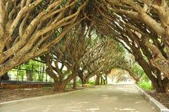 Fantastisk trädgård i Alger arkivbild