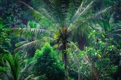 Fantastisk tropisk natur Fotografering för Bildbyråer