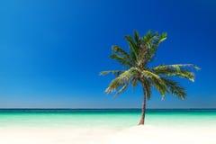 Fantastisk tropisk strand med palmträdet, vit sand och turkoshavet Arkivbild