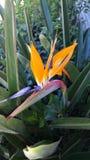 Fantastisk unik blomma Arkivbild