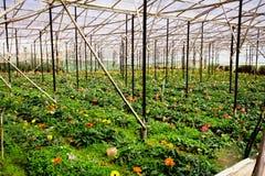 Fantastisk upprepande växthusfältstruktur Arkivfoton