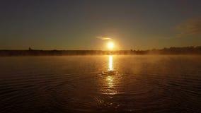 Fantastisk utbildning på solnedgången - yrkesmässig simmare i sjön arkivfilmer