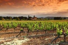 Fantastisk vingårdsolnedgång Arkivbild