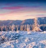 Fantastisk vintersoluppgång i Carpathian berg med rimfrost kryper ihop royaltyfri bild