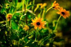 fantastiska blommor Arkivbilder