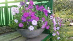 fantastiska blommor Arkivfoton